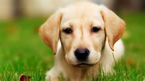 xx dog xx  Dogs Wallpaper