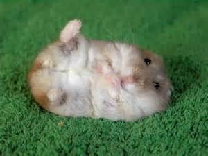 Best Cute Stuff: Cute Hamster