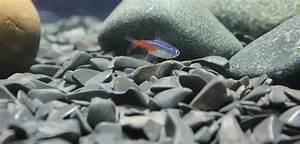 Co2 Rechner Aquarium : zierfisch und aquarium ~ A.2002-acura-tl-radio.info Haus und Dekorationen