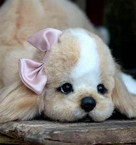 460 best too crazy too cute images on pinterest fluffy for Ffbe veterinarian