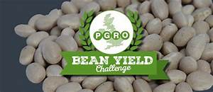Bean Yield Challenge    Growing A 10t  Ha Field Bean Crop