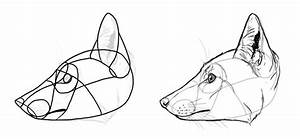 How To Draw Foxes Of All Shapes And Sizes  With Images