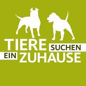 Tiere Suchen Ein Zuhause Instagram : zuhause gefunden bei simone sombecki facebook ~ Watch28wear.com Haus und Dekorationen