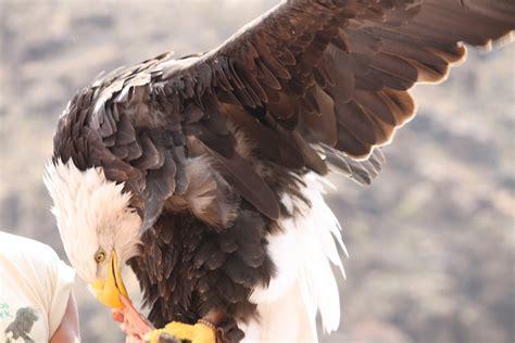 Amerikas Wappentier Foto & Bild | europe, canary islands ...