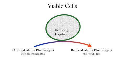 AlamarBlue Cell Viability Assay Reagent - Cepham Life ...