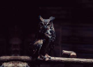 Animals | PixelsTalk.Net