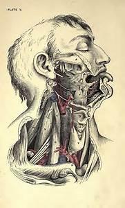 66 Best Veins Anatomy Images On Pinterest