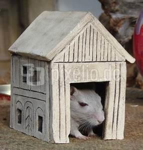 Maus Im Haus : kostenloses foto maus im haus ~ A.2002-acura-tl-radio.info Haus und Dekorationen