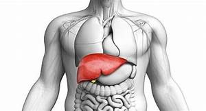 World Liver Day  Take Good Care Of Your Liver To Live