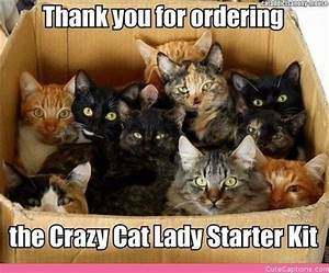 Adorable Kittens with Captions | You can create a caption ...