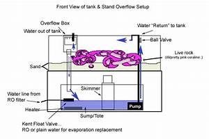 Ikanhias  Langkah Mempersiapkan Aquarium Air Laut