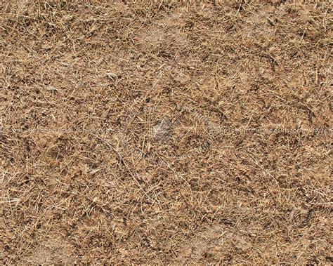 Dry grass texture seamless 12928