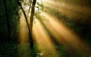 Forest, Trees, Sun, Rays, Nature, Landscape, Wallpaper