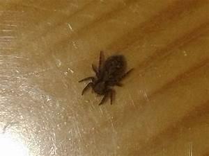 Viele Spinnen Im Haus : was fressen spinnen die im haus leben haustiere spinne ~ Watch28wear.com Haus und Dekorationen