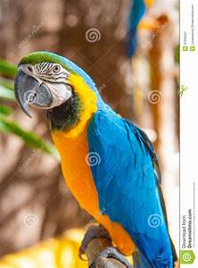 Blue Parrot Portrait With Yellow Neck Royalty Free Stock ...