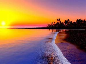 Sea, Palm, Tree, Beach, Colorful, Sky, Sunset, Images, Summer, Hd