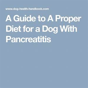A Guide To A Proper Diet For A Dog With Pancreatitis