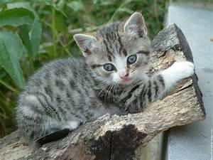 Je Donne Tout Gratuit : cherche je recherche un chaton gratuit 92160 antony chats et chatons donner ~ Gottalentnigeria.com Avis de Voitures