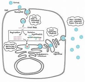 Zika As A Flavivirus U2013 The Zika Virus Wiring Diagram