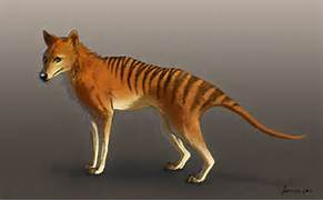 Tasmanian Tiger - Facts and Pictures