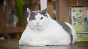 Körperfett Berechnen Formel : ist ihre katze zu dick der body mass index f r katzen verr t es ihnen ~ Themetempest.com Abrechnung