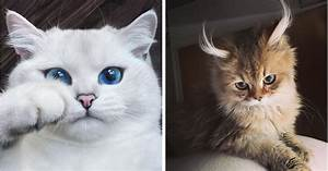12 Of The World's Most Beautiful Cats | Top13