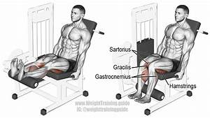 Seated Leg Curl Exercise Instructions And Video