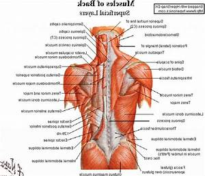Lower Back Anatomy Pictures   Lower Back Anatomy Pictures