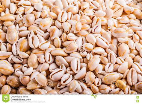 Free delivery and returns on ebay plus items for plus members. Tropical seashell heap stock image. Image of shell, assortment - 74783649