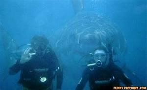 funny shark attack scuba | Funny Dive, Snorkel & Kayak ...
