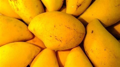 มะม่วง : ทำไมไทยส่งออกมะม่วงได้น้อยลงเมื่อโลกร้อนขึ้น - ข่าวสด