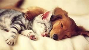 Cute Dog and Cat Wallpaper   PixelsTalk.Net