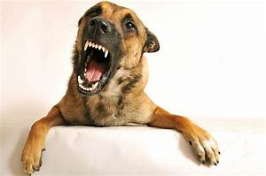 dog aggression training strategies tips and advice With dog training for aggressive dogs