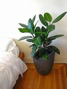 Easiest House Plants to Maintain: Indoor Houseplants