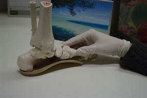 A Guide To Orthotics