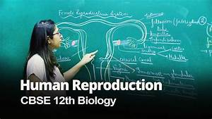 Female Reproductive System  Cbse 12th Biology In English