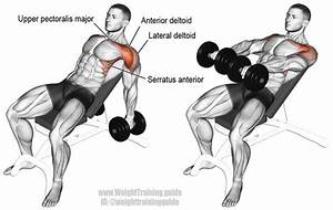 Incline Dumbbell Front Raise Exercise Instructions And