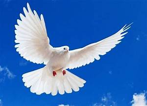 Download Wallpapers Of Love Birds Bird Picture Images Free ...