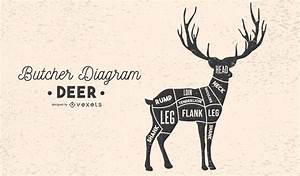 Deer Butcher Diagram