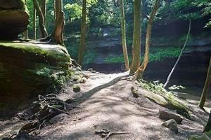 Trail, Lit, By, Sunlight, Through, Dark, Forest, Stock, Photo