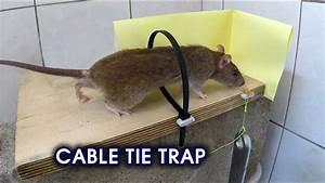 Cable Tie Rat  Mouse Trap