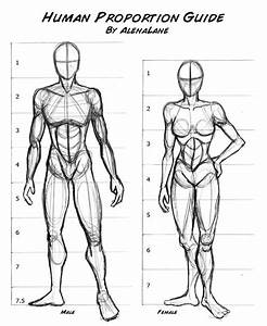 17 Best Images About Anatomy And Proportion On Pinterest