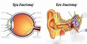Ear Diagram Quizlet
