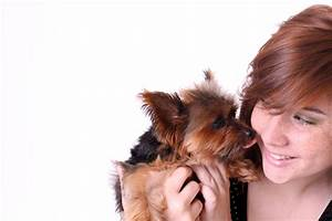 Laisser Un Chien Seul Quand On Travaille : quel chien choisir quand on travaille ~ Medecine-chirurgie-esthetiques.com Avis de Voitures