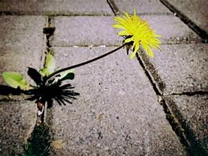 Heimische Pflanzen Für Den Garten : unkrautvernichter f r den eigenen garten ~ Michelbontemps.com Haus und Dekorationen