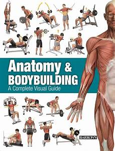 Anatomy  U0026 Bodybuilding