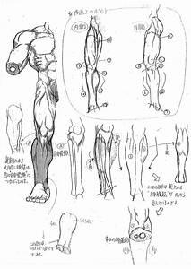 Capcom U0026 39 S Street Fighter Anatomy Guide