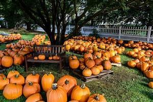 Pumpkin, Patch, Halloween, Autumn, Wallpapers, Hd, Desktop, And, Mobile, Backgrounds