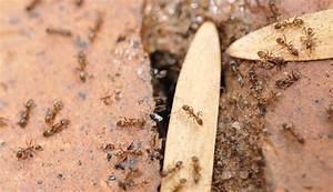 Ameisen Im Haus Woher : best ameisen in der k che was tun images amazing home ~ Lizthompson.info Haus und Dekorationen