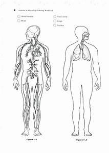 Bestseller  Anatomy And Physiology Blood Vessels Worksheet
